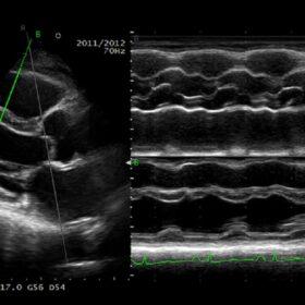 Dormed Hellas 50 Ultrasound